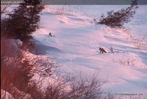January 29th, 2014. Another glimpse of the fox at sunset.